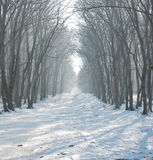 Cold winter in the woods Stock Image