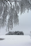 Cold winters day Stock Images