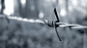 Cold wire. Barbed wire fence in black and white Royalty Free Stock Photography