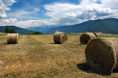 Colden Hay Bales. At the countryside Royalty Free Stock Images