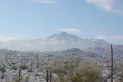 Coldest Sonoran Royalty Free Stock Photos