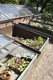 Coldframes foto de stock royalty free
