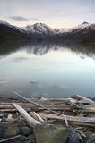 Logs Shore Coldwater Lake Mountains Cascade Range. Coldwater Lake at the base of Mount St. Helens Washington State USA Royalty Free Stock Image