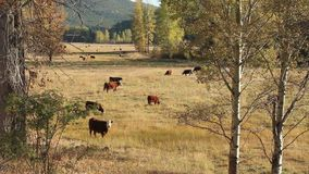 Coldwater River Valley Pasture  stock video footage