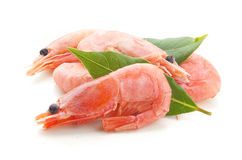 Coldwater shrimps Royalty Free Stock Image