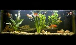 coldwaterfiskbehållare Arkivfoto
