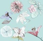 Coleção ilustração stock
