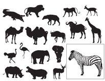 Coleção africana dos animais Fotografia de Stock