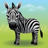 Coleção animal do bebê: Zebra Imagens de Stock