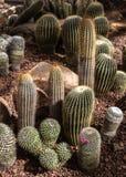 Coleção bonita do cacto no jardim botânico Fotos de Stock Royalty Free