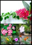 Cole??o bonita e colorida das flores imagens de stock royalty free