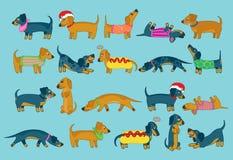 Para o amor de cães de salsicha! Fotografia de Stock