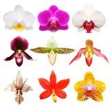Coleção colorida da orquídea Foto de Stock