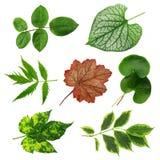 Coleção colorida das folhas Imagem de Stock Royalty Free