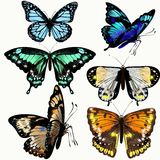 Coleção colorida de borboletas realísticas do vetor Fotos de Stock Royalty Free