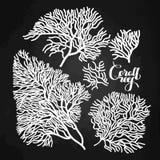 Coleção coral gráfica ilustração royalty free