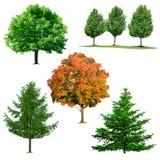 Coleção da árvore Imagens de Stock