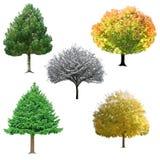 Coleção da árvore Fotos de Stock