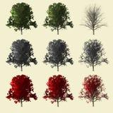 coleção da árvore 3d Imagem de Stock