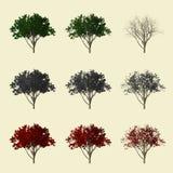 coleção da árvore 3d Fotos de Stock