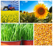 Coleção da agricultura Fotografia de Stock