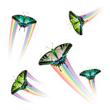 Coleção da borboleta Imagens de Stock Royalty Free