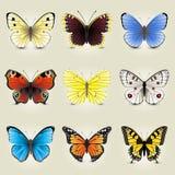 Coleção da borboleta ilustração royalty free