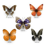 Coleção 02 da borboleta Fotografia de Stock Royalty Free