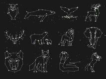 Coleção da constelação dos animais no céu escuro Animais selvagens com linha e estrelas, estilo do horóscopo constelação ilustração royalty free
