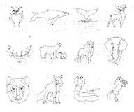 Coleção da constelação dos animais no fundo branco Animais selvagens com linha e estrelas, estilo do horóscopo ilustração stock