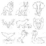 Coleção da constelação dos animais da tração da mão no céu escuro Animais selvagens esboçados com linha e estrelas, estilo do hor ilustração do vetor
