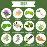 A coleção da erva, vetor saudável do alimento, ícone liso ajustou dois ilustração stock