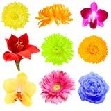 Coleção da flor Fotos de Stock Royalty Free