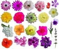 Coleção da flor fotografia de stock royalty free