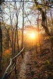 Coleção da floresta do outono Fotografia de Stock Royalty Free