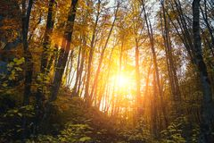 Coleção da floresta do outono Foto de Stock Royalty Free