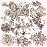 A coleção da mão do vetor tirada detalhou flores para o projeto ilustração do vetor