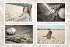Coleção da menina bonita das fotos nas orelhas e na farinha do trigo do amd do campo de trigo na tabela rústica de madeira velha fotografia de stock