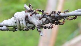 Coleção da natureza das formigas dos insetos vídeos de arquivo
