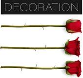 Coleção da rosa vermelha bonita isolada no fundo branco ilustração Foto-realística do vetor da malha do inclinação ilustração stock