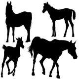 Coleção da silhueta do cavalo Foto de Stock