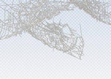 Coleção da teia de aranha, isolada no fundo preto, transparente Fotografia de Stock Royalty Free