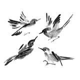 Coleção da tinta de Sumi-e dos pássaros Pintura da aguarela Imagem de Stock Royalty Free