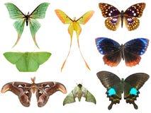 Coleção da traça da borboleta Fotos de Stock