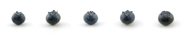 Coleção da uva-do-monte Foto de Stock