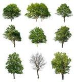 Coleção das árvores Fotos de Stock