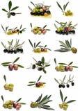 Coleção das azeitonas. Imagens de Stock