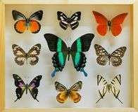 Coleção das borboletas fotos de stock