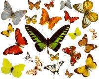 Coleção das borboletas Fotografia de Stock Royalty Free