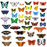 Coleção das borboletas Imagem de Stock